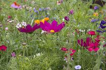 Wildblumenbeet von Petra Dreiling-Schewe