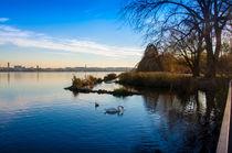 Ente und Schwan auf der Außenalster in Hamburg von Thomas Sonntag