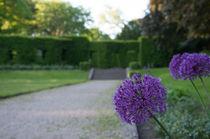 Violette Schönheit im Park von Thomas Sonntag