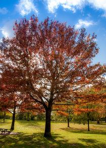 Herbst im Park von Thomas Sonntag