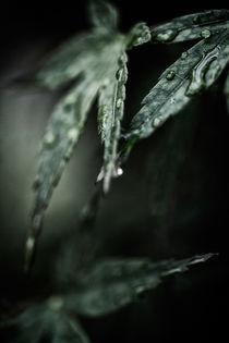 Zierahorn nach einem Regenschauer von Petra Dreiling-Schewe