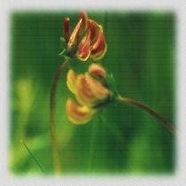 Kleine Wiesenblumen by Sonja Speier