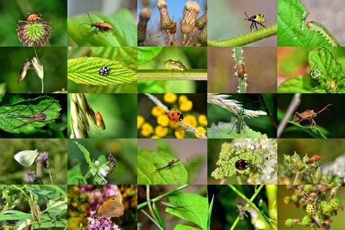 Insekten-collage