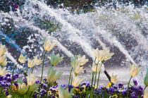 Frühlingserwachen von Thomas Sonntag