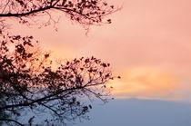 Herbstsinfonie von Thomas Sonntag