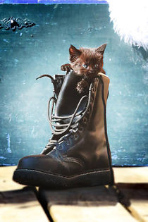 Kitten in the boot. von Anja Foto Grafia