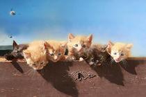 Kitten in der Truhe. von Anja Foto Grafia