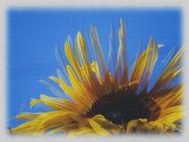 Sonnenblume by Sonja Speier