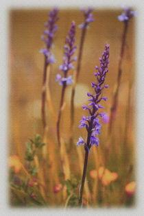 Wiesenblumen by Sonja Speier
