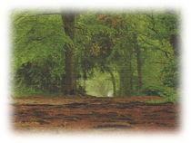 Wald by Sonja Speier