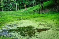 Green little lake  by Enache Armand Iustinian