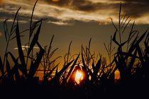 Sonnenuntergang  von Ingrid Bienias