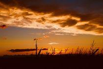 sunrise von Ingrid Bienias