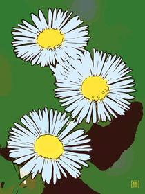 Blumen Poster Gänseblümchen grün von Robert H. Biedermann