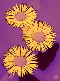 Blumen Poster WelikeFlowers Gänseblümchen gelb-lila von Robert H. Biedermann