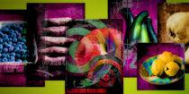 Collage_Obst+Gemüse_1 von Edgar Emmels