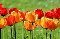 Gelbe und rote Tulpen von Ioana Hraball
