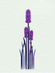 Grape Hyacinth von Sybille Sterk