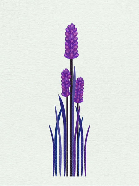 Grapehyacinth-c-sybillesterk