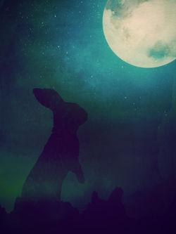 Moongazinghare-c-sybillesterk