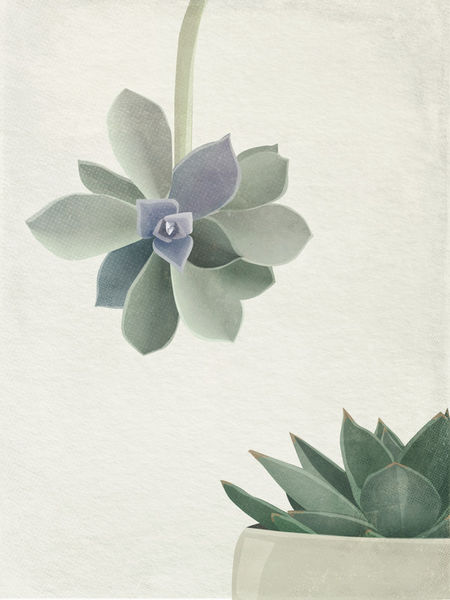 Succulents-c-sybillesterk