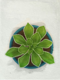 Succulent in teal pot by Sybille Sterk