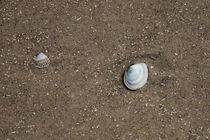 Muscheln am Strand von Ralf Ramm - RRFotografie