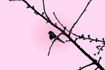 Bird on Cherry Tree by reas