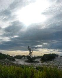 Beach by Talita Muniz