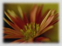 Blume in Rot von Sonja Speier