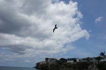 seagull by Talita Muniz