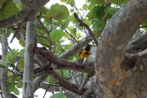 Bird 2 von Talita Muniz