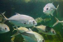 Fish by Talita Muniz