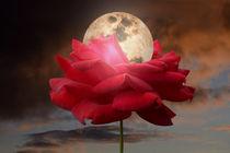 Moon Glow von CHRISTINE LAKE