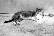 Cat by Talita Muniz