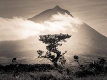 Der Baum und sein Berg by Alexander Dorn