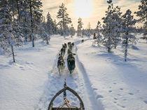 Hundegespann im Winter von Robin Brock