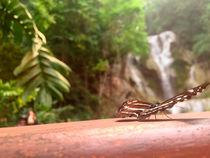 Schmetterlings Paradies von Robin Brock