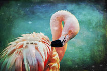 Flamingo Portrait von AD DESIGN Photo + PhotoArt