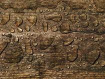 Planke und Regenwasser von dresdner