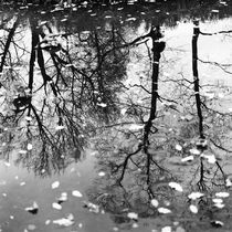 Reflection of trees by Alexander Rodin