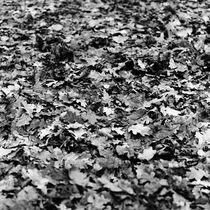 Fallen leaves von Alexander Rodin
