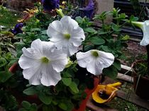 Flores blancas by Ricardo De Luca