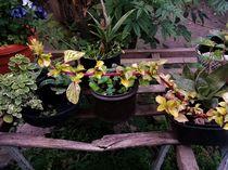 Flores y plantas von Ricardo De Luca