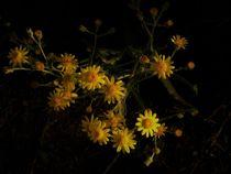 Flores amarillas by Ricardo De Luca