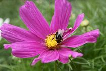 Biene von Bernd Fülle