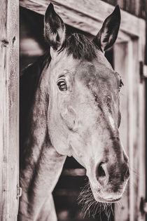 Brown horse von Silvia Eder