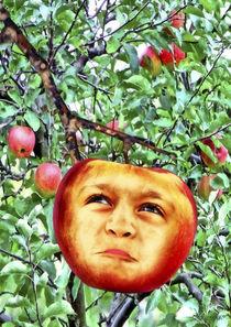 Äppelbert von garrulus-glandarius