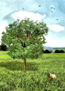Der Apfelbaum von garrulus-glandarius