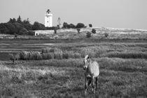 Pferd und Leuchtturm Knudshoved Fyr, Fünen (Dänemark) von dresdner